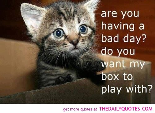 cute animal quotes - Google Search