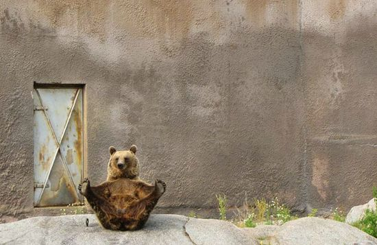 oso flexible