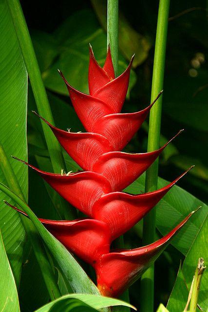 A True Bird of Paradise Flower