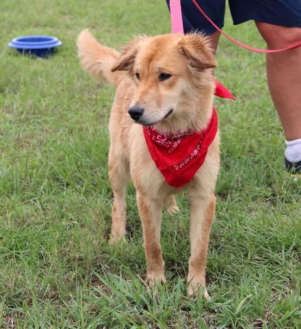 Lily is a simply joy to be around. 1 yr old   Great with other dogs and with people, likes to be close to you,  touching you almost all of the time, happy dog.  Wonderful smallish medium size weighing about 30 lbs.  For some reason, she looks so serious in...