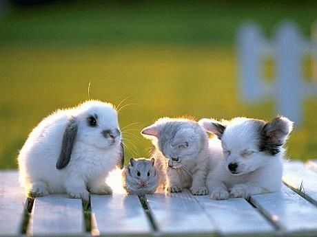 Bunny, mouseythingy, kitty, puppy all in one picture! How?! SO. CUTE.