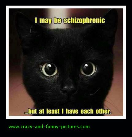 Funny cat pictures: i may be ashizophrenic.... Funny Animal Pictures posted every day ! Funny Animal site brings daily updates of funny dogs and cats, pics and videos