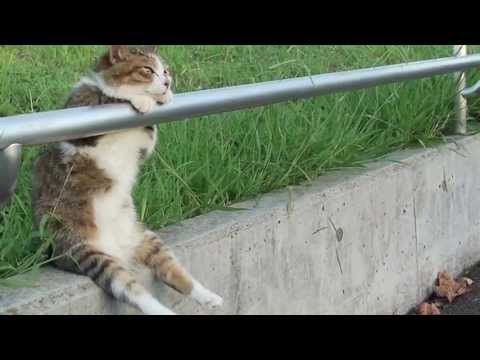 HD Ver. ???? ???????? Cat sitting relaxed???? - YouTube