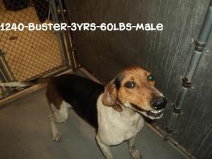 #WVIRGINIA #GassingShelter ~ Buster is a Neutered #adoptable Treeing Walker Coonhound Dog in #Beckley - This boy is full of energy & love! He's very sweet, loves attn & loves to bay! A stray ready for adoption on 5/30/13 who wants a loving family of his own. He'll need a large fenced in area to run & play!  - HUMANE SOCIETY OF RALEIGH COUNTY 325 Gray Flats Rd Beckley WV 25802 mailto:rcpets@hot... P 304-253-8921