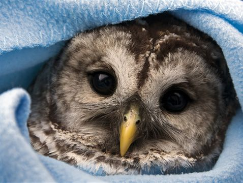 SO CUTE!! Love owls!