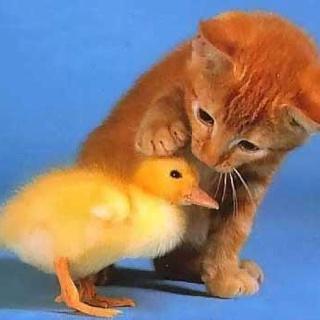 Good ducky