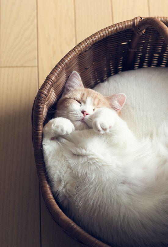 Sweet Dreams ?