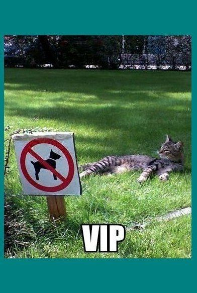 #funny #cats #funny #cat #lol #humor #hilarious  #cute  #cat #feline #vip #kitty #resort no #dogs