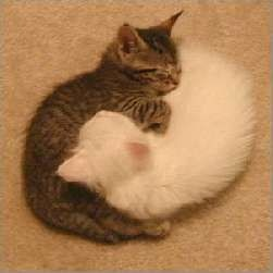 yin yang kitties