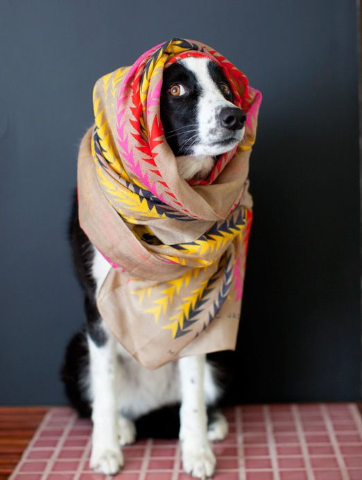 The dog's got style. By @Sarah Chintomby Yates  (repinned from my week of guest pins over on @Etsy )