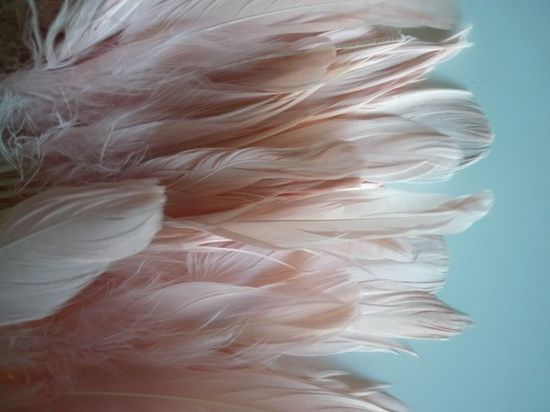 feathers..