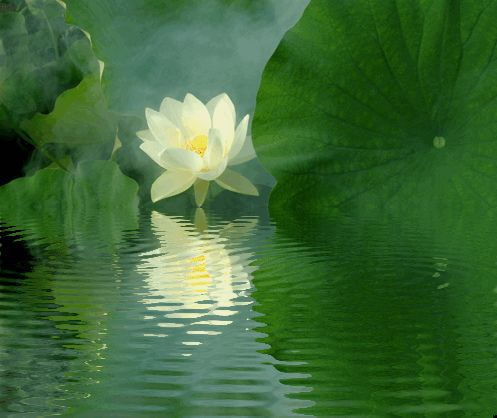 Lotus Flower Reflections / green / IMGP6812-refl - ???? ??????, ????, ??, ?? ?????, Fleur de Lotus, Lotosblume, ????, ?? by Bahman Farzad, via Flickr