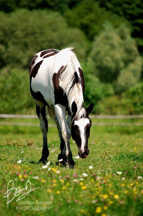 Whispering Plains (Horse & Human RP) 77abc2c469f2258472d3b50d8985bbfa