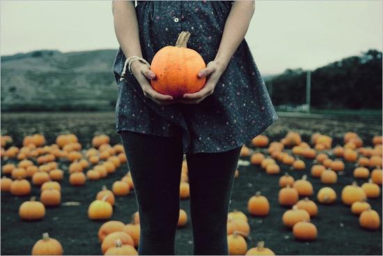 pumpkin patch #photography