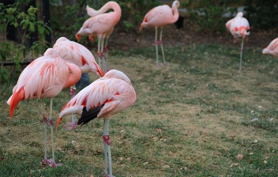 Flamingos go Orange at ET's Company Picnic at the Zoo!