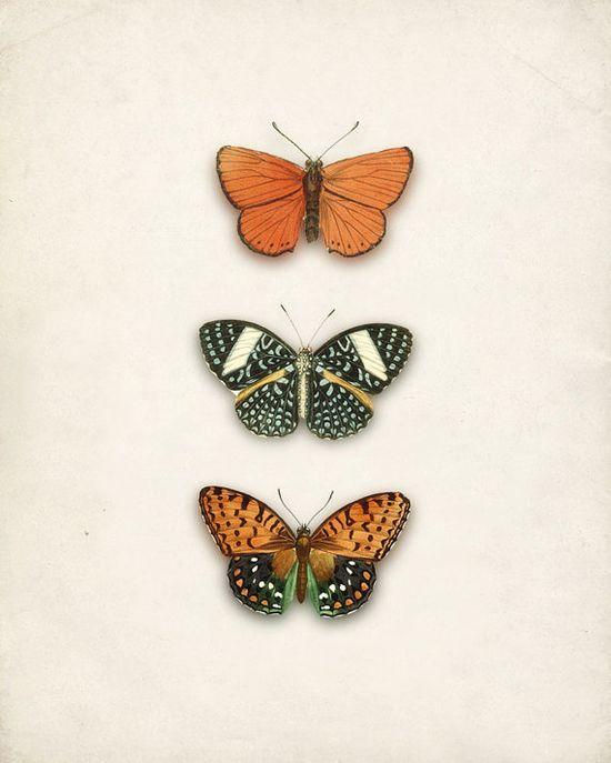 Love Butterflies :)