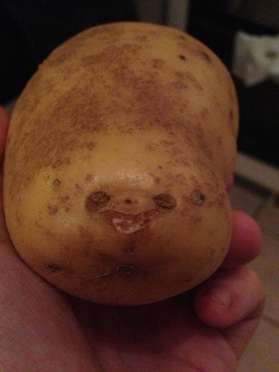 This Potato Looks Like A Sloth....just for you Lydia...