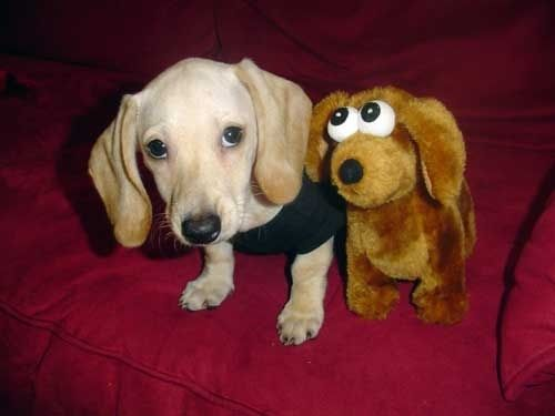 pictures of animals with stuffed animals of themselves
