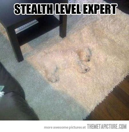 Camouflage Expert.