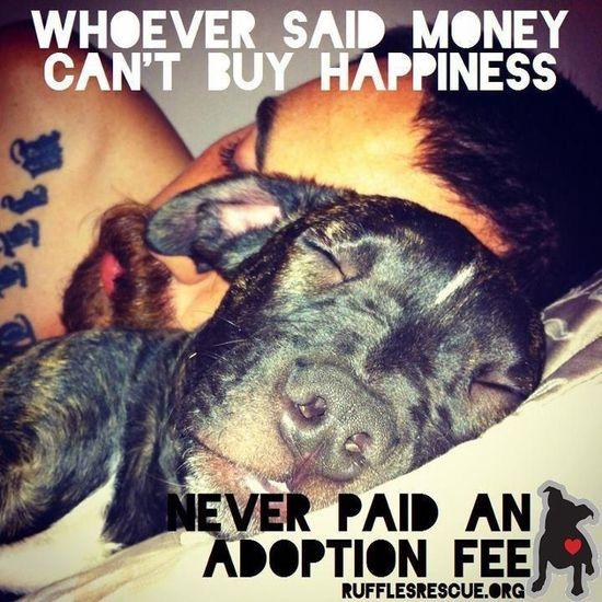 adopt, adopt, adopt
