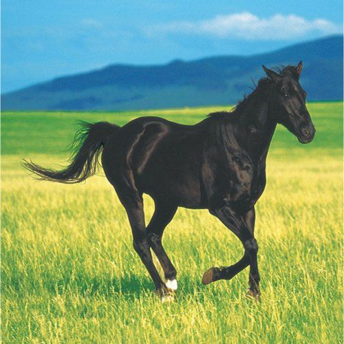 Wild Horses Beverage Napkins (16) Party Accessory $3.22 (71% OFF)