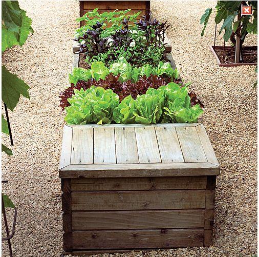 Raised modern kitchen garden