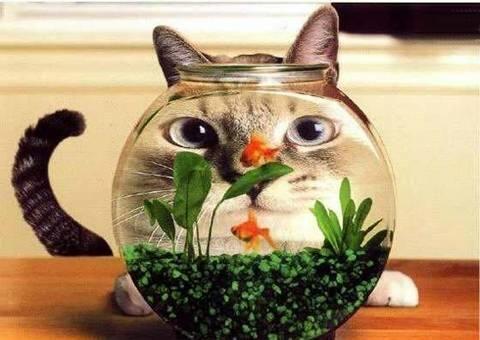 cat fishbowl