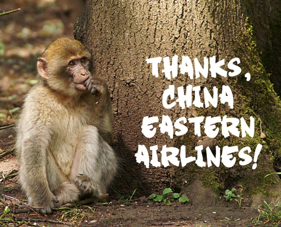 VICTORY! China Eastern Airlines will no longer be shipping primates to labs to be used in experiments! peta.vg/t2