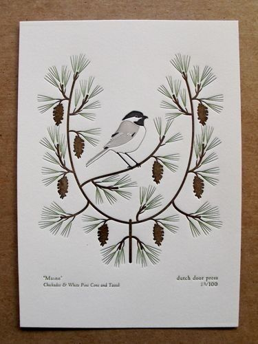 maine chickadee