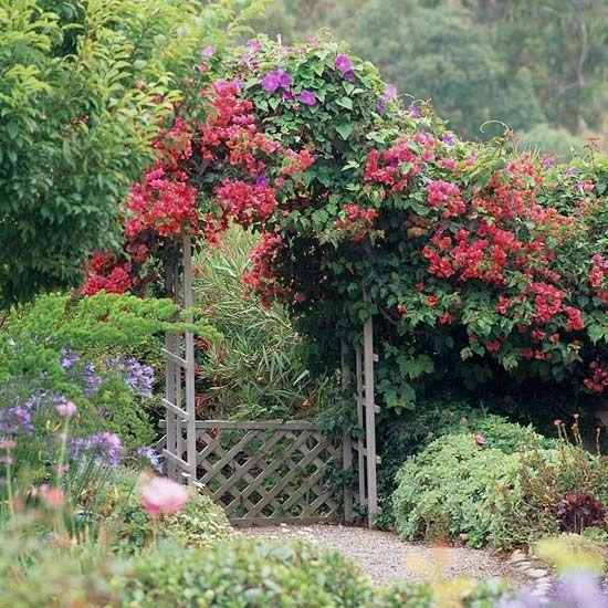 Climbing roses over an arbor.