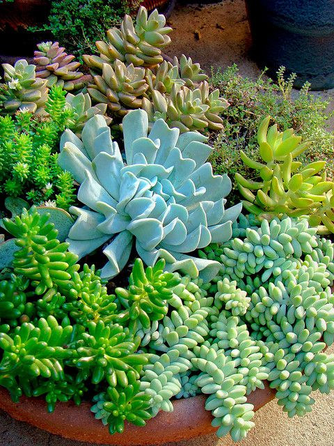 more succulents - I love the natural variety of color