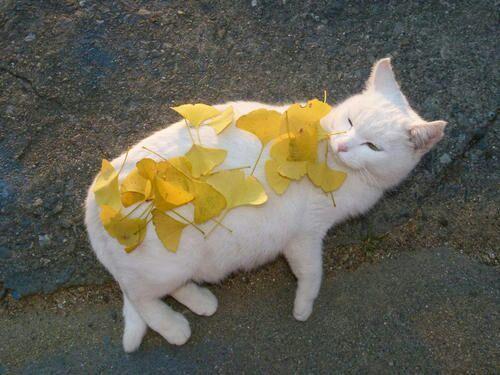LOL, cute cat, #cat #cute