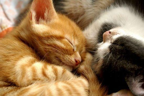Yet another sleepy kitten...