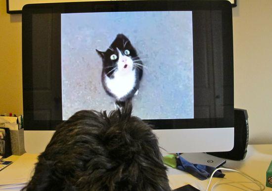 Zoe the Shih Tzu watching a funny cat on YouTube :)