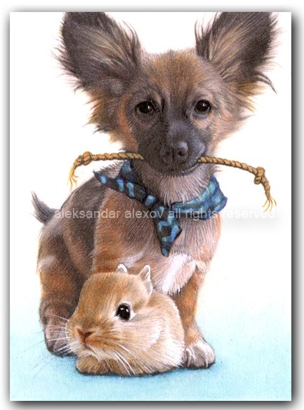 such cute pet portraits!!!!