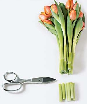 remember to snip the stems {flower arranging 101} #tulips