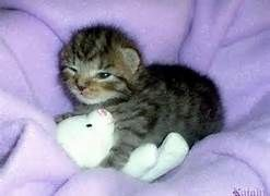 cute baby animals sleeping -