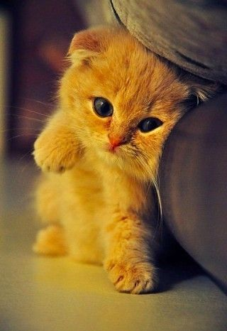 If this kitty was any cuter I may actually cry!