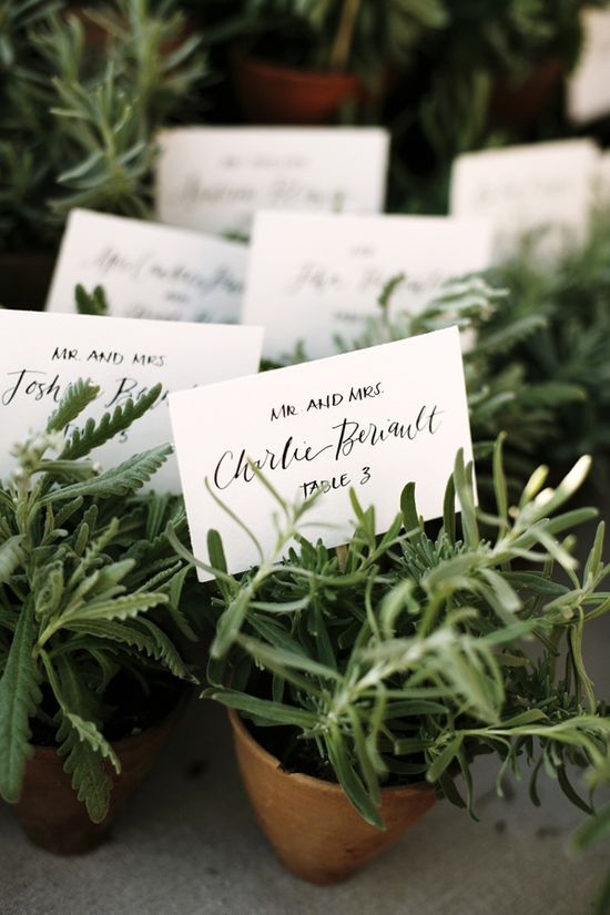 .: Potted fresh herbs as favors/table numbers. :.