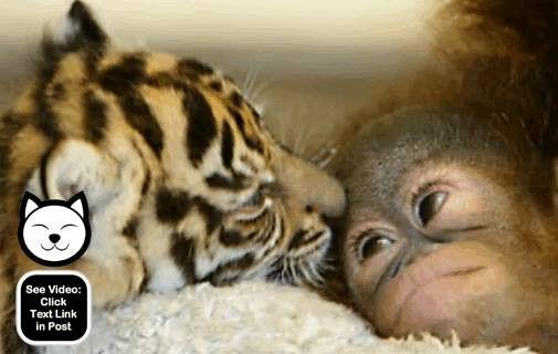 More cute baby animal pictures!  www.animalvideoof...  #AVOTW