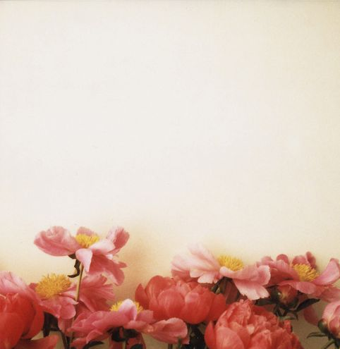"""""""flowers cover everything"""" photographic print by Jen Gotch"""