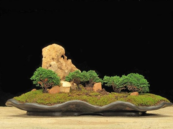 small bonsai art #garden