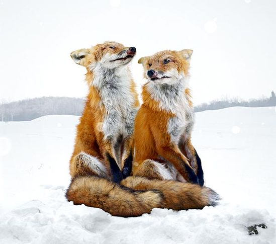 Keep your tail out of the snow!