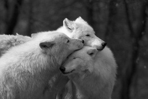 Wild Animals Photography
