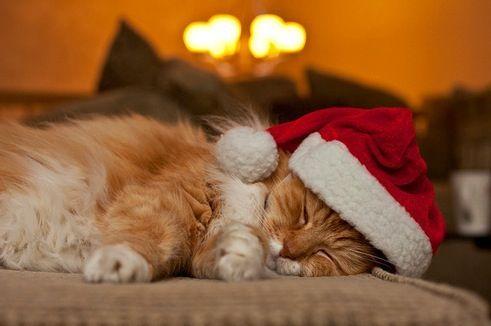 Sleeping Christmas Kitty cute cat fireplace christmas christmas hat christmas kitty