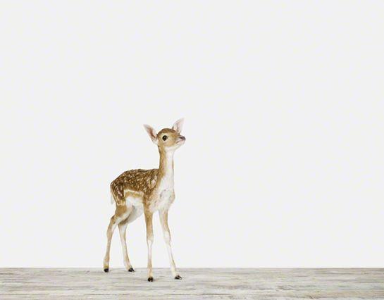 baby deer poster print