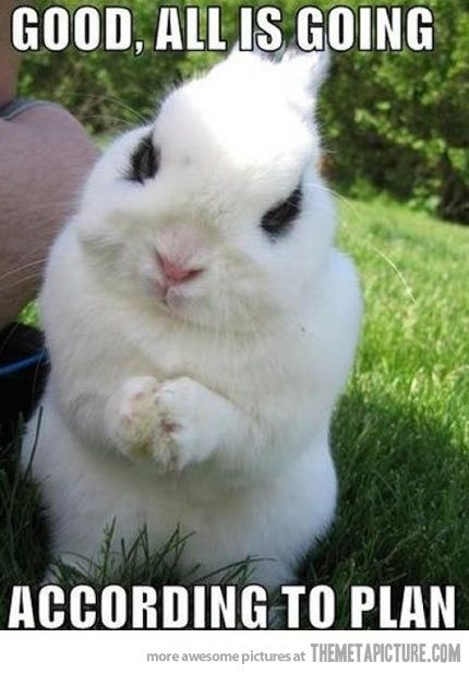 Evil bunny…