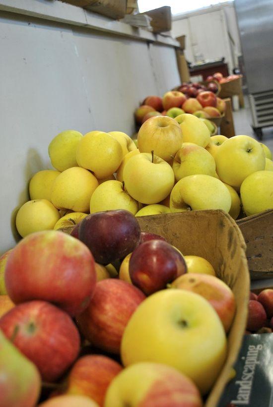 Apples galore! Fresh fruit at #starkbros #gardencenter
