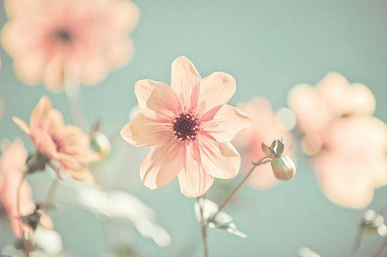 pink and aqua: faded flowers