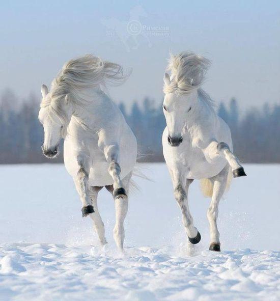 white on white horse beautiful
